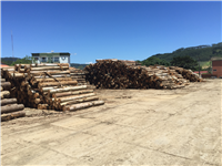 apitong trailer decking log-yard-indonesia-keruing-2.JPG