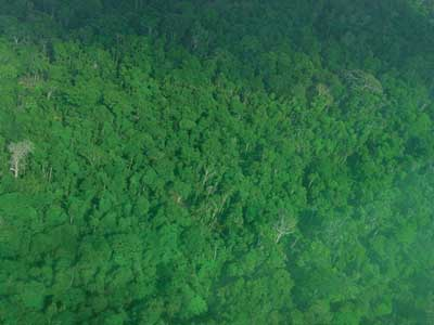fly over tropical forest